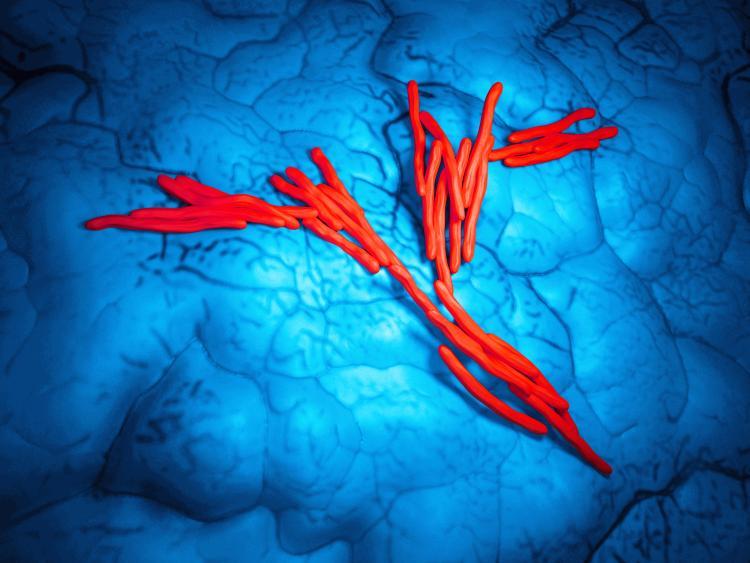 TBC onder de microscoop
